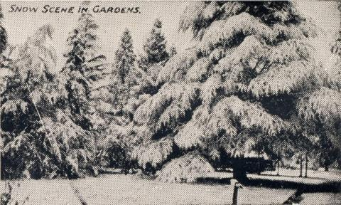 Snow scene in gardens, Beechworth