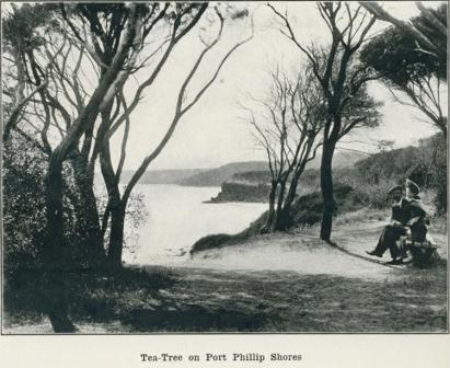 Tea-Tree on Port Phillip Shores, 1918