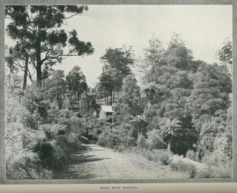 Olinda Road, Sassafras, 1918