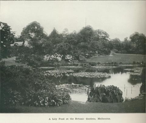 A lily pond at the Botanic Gardens, Melbourne, 1918