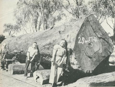 Murray Valley Sawmills, 1950