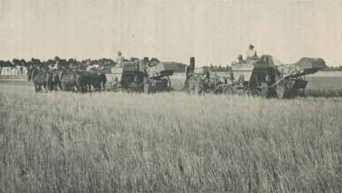Cutting the Crop, Longerenong Agricultural College, Dooen, 1929