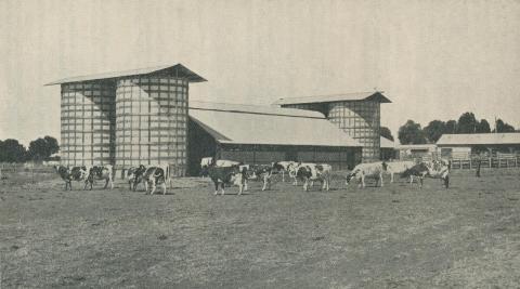 Dairy Herd, Longerenong Agricultural College, Dooen, 1929