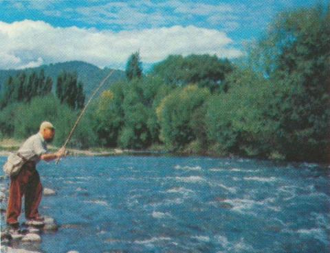 Trout Fishing, Kiewa, 1971
