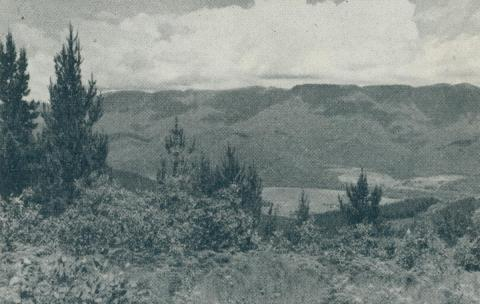 Alpine country, from Mount Buffalo, 1951