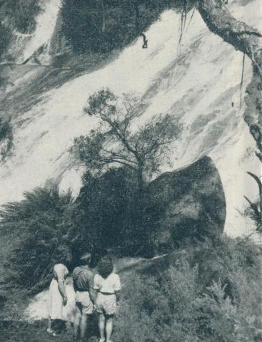 Mount Buffalo National Park, 1951