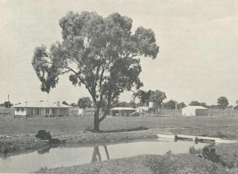 An irrigated property at Waaia, 1964