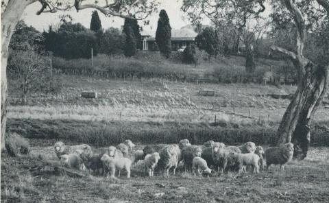 Homestead at Hexham, 1958