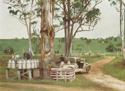 Stacking of milk ready for delivery to the factory, Scotts Creek, 1958