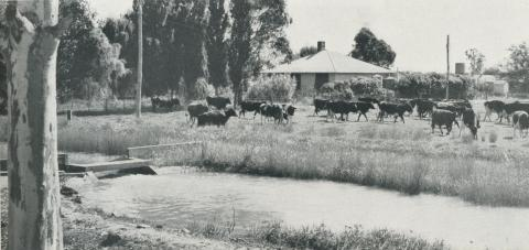 Irrigation channel, Tongala, 1958