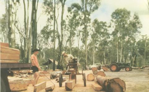 Sleepers are cut for Victorian Railways, Barmah, 1960
