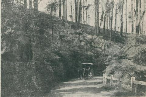 Black Spur Road, Healesville, 1911