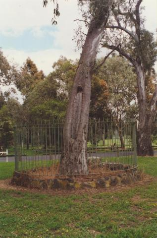 Bundoora Park scarred tree, 2000