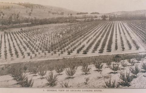Pakenham, Toomuc Valley orchard, 1911