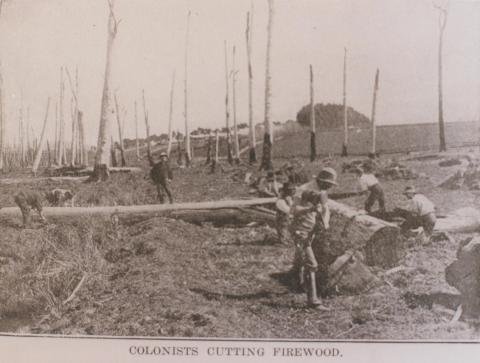 Colonists cutting firewood, Leongatha, 1912