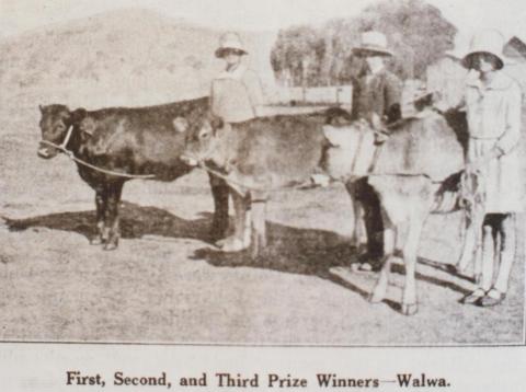 Prize calves, Walwa, 1929
