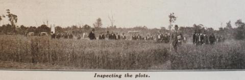 Mallee wheat tests, field day at Werrimull, 1932