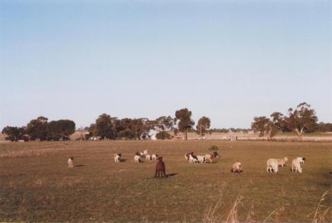 Farm, Caniambo, 2012