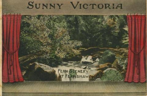 Fern scenery at Fernshaw, 1909