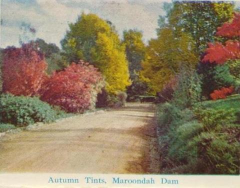 Autumn tints, Maroondah Dam, Healesville
