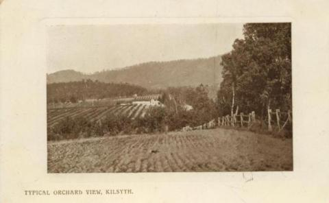 Typical Orchard View, Kilsyth, 1910