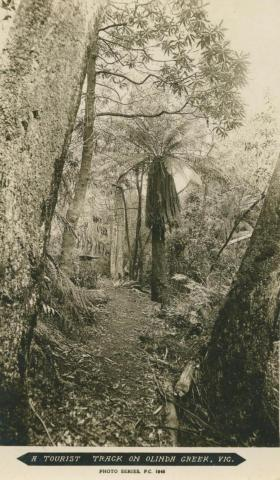 A Tourist Track on Olinda Creek, Olinda