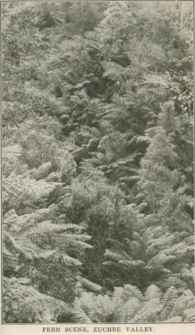 Fern Scene, Euchre Valley, 1947