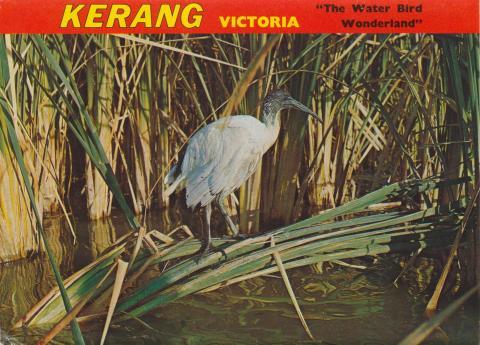 The Water Bird Wonderland, Kerang, 1975