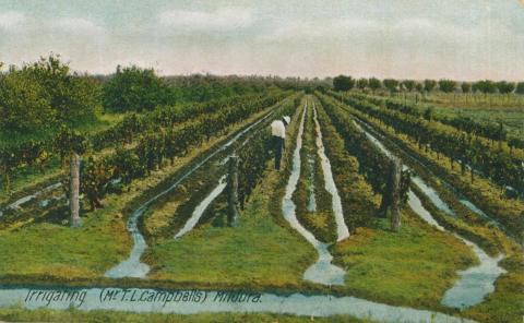 Irrigating (Mr T.L. Campbell's) Mildura
