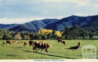 Pastoral scene, Wandiligong