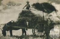 Bringing in the lucerne, Bacchus Marsh, 1954