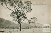 Summer heat, Victoria Valley, The Grampians, 1954