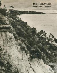 Treed coastline, Mornington, 1954