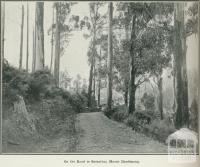 On the road to Sassafras, Mount Dandenong, 1918