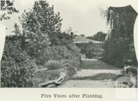 Dr Wight's, Kyabram, five years after planting, 1918