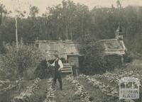 Bush Hut on Olinda Creek, Olinda, 1943