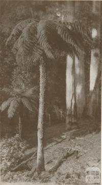 In the Dandenong Ranges, 1934