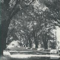 Avenue of Honour, Bacchus Marsh, 1968