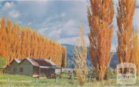 Lombardy Poplars, Eurobin, c1960