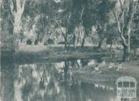Natural Swimming Pool, Wangaratta, 1951