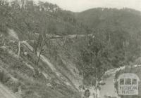 Train entering the Thomson Valley, Walhalla, c1910