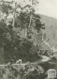 A Mountain Road, Walhalla, c1910