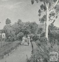 Botanical Gardens, Maryborough, 1959