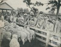 Selling stock at the Municipal Saleyards, Horsham, 1960