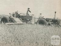 Harvesting a district wheat crop, Horsham, 1960