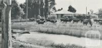 Irrigation channel, Tongala, 1958
