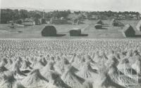 Flax production, Drouin, 1955