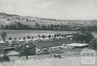 Saw milling, kiln seasoning and planing mill, Swifts Creek, 1955
