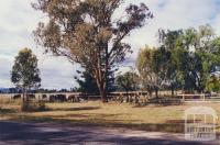Tarrawingee near St Stephens Church, 2000