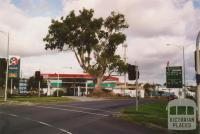 Historic red gum, corner of Manningham Road and Bridge Street, Bulleen, 2005